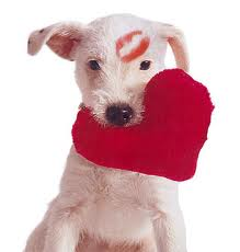 animal-valentine